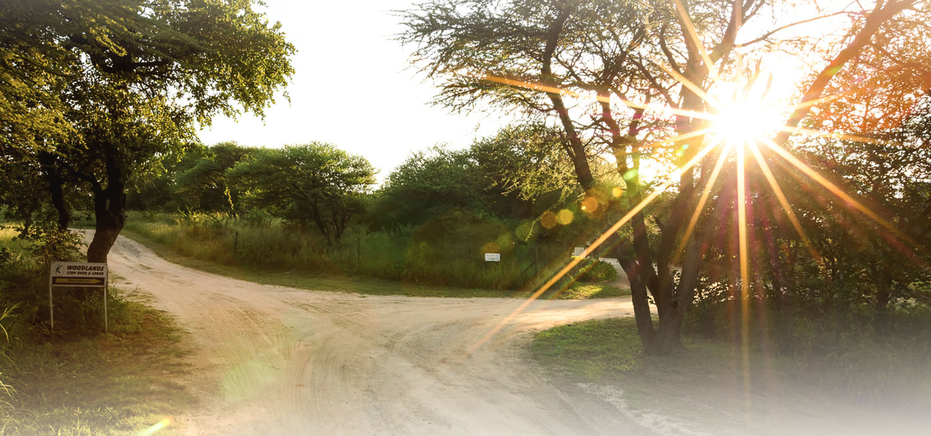 Sunrise at Woodlands